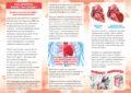Icon of 01 • Буклет «Влияние алкоголя на сердце» • CURV 2